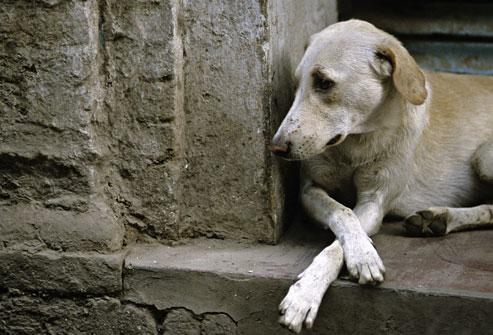 Ajude animais abandonados e concorra a uma cesta do amor.
